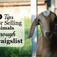 10 Tips For Successfully Selling Animals On Craigslist