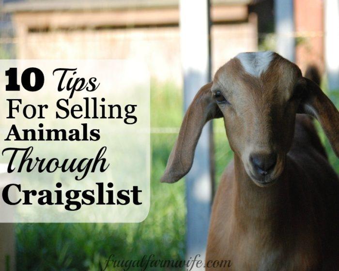 selling animals on craigslist