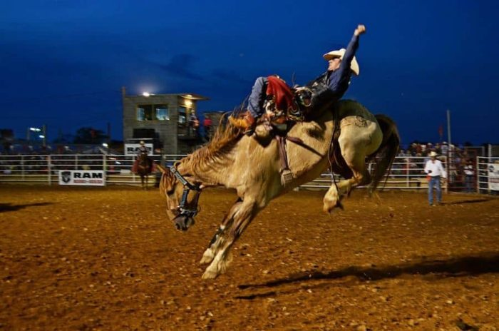 bareback riding at a local rodeo