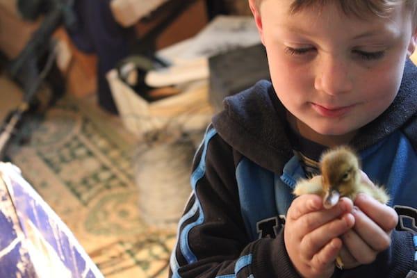 garrett holding a duckling