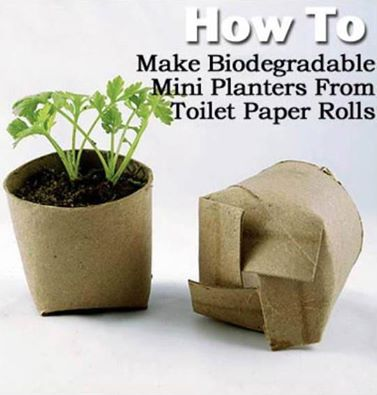 toilet paper roll planter