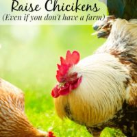 Why You Might Want To Raise Chickens – Even If You Don't Have A farm