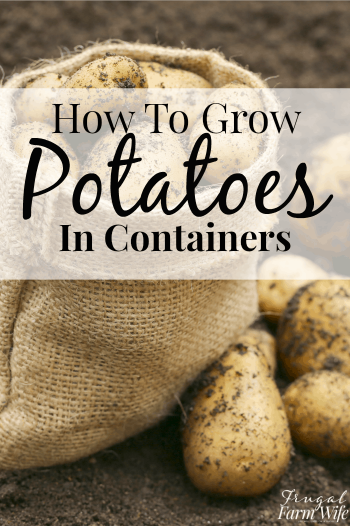 How to grow potatoes in containers - this is perfect for small space gardening!