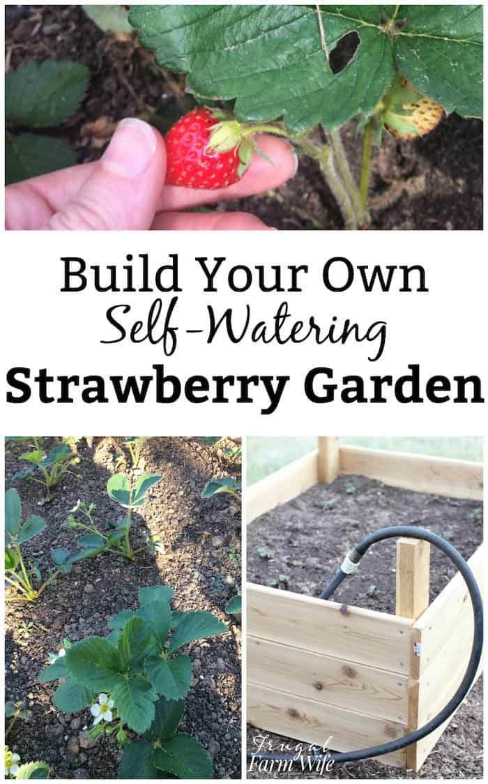 How to build your own self-watering garden bed | sub-irrigated garden | diy