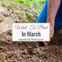 gardening in march - what to plant