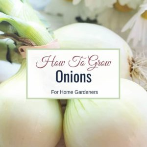 How To Grow Onions For Home Gardeners