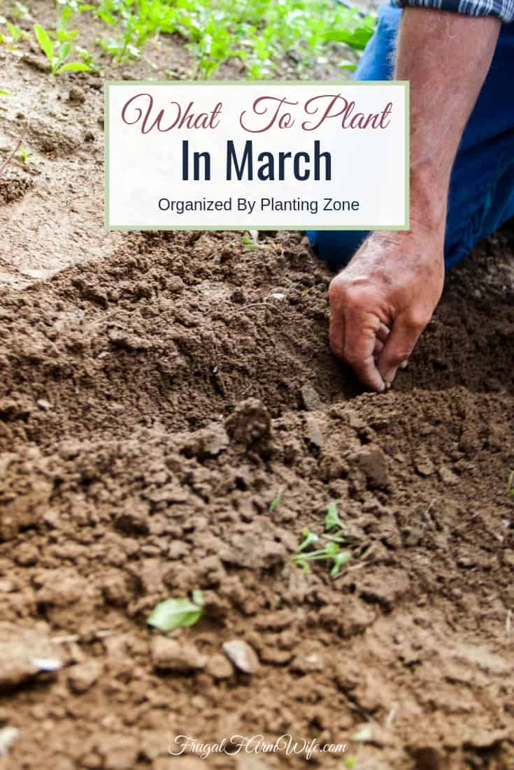Wanting to get your gardening started but not sure what to plant in March? Get the answers you need here.