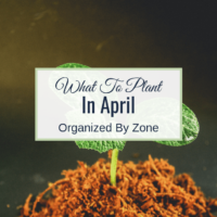 what to plant in April by zone