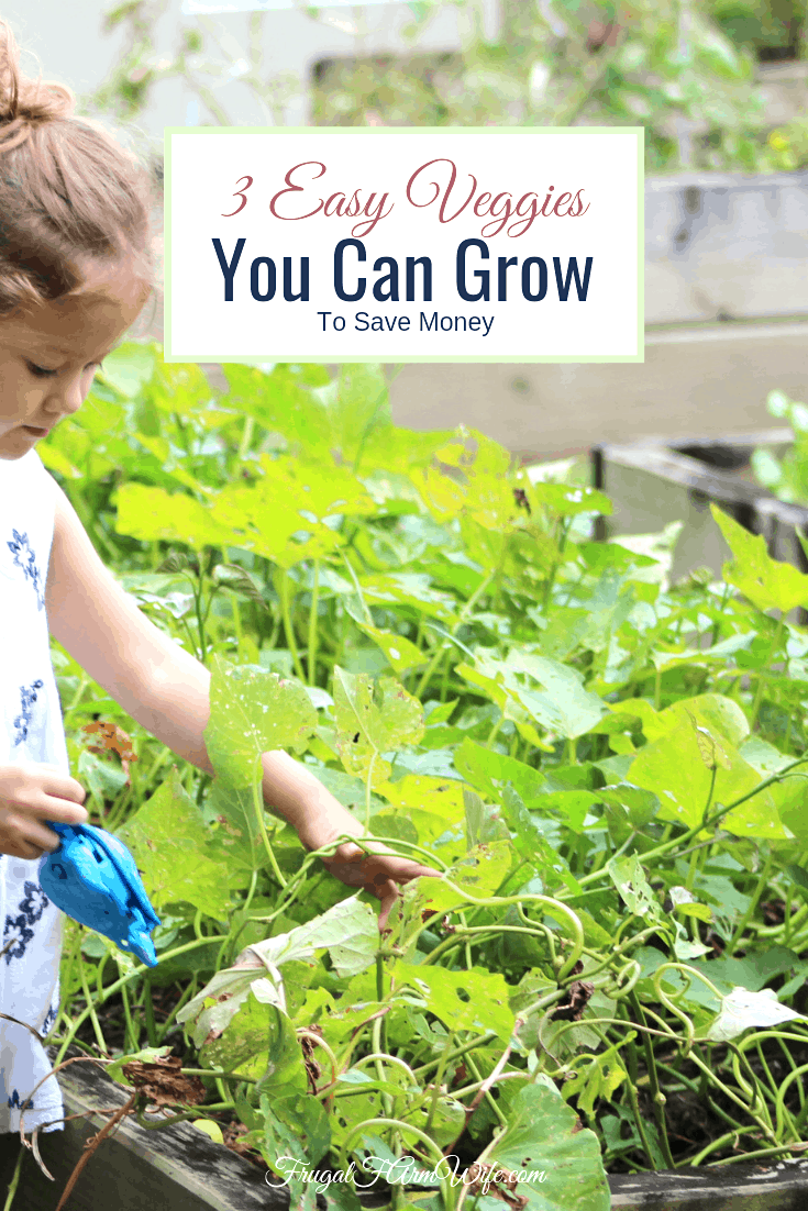 Fill your garden with veggies that are easy to grow and save you money!