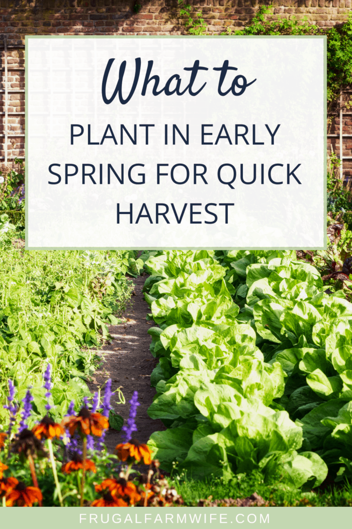 What to plant in early spring for the quickest harvest