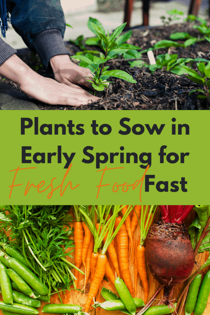 plants to grow in early spring for fast harvest