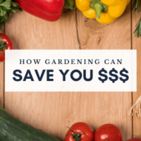 How Gardening Can Save You Money Every Year