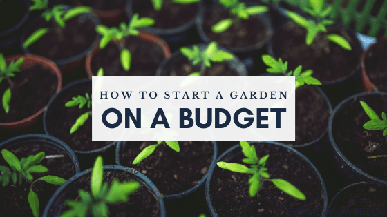 Tips for starting a garden on a budget