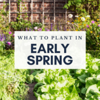 What to Plant in Early Spring